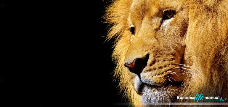 Co mają wspólnego lew i menedżer - Business Life Manual